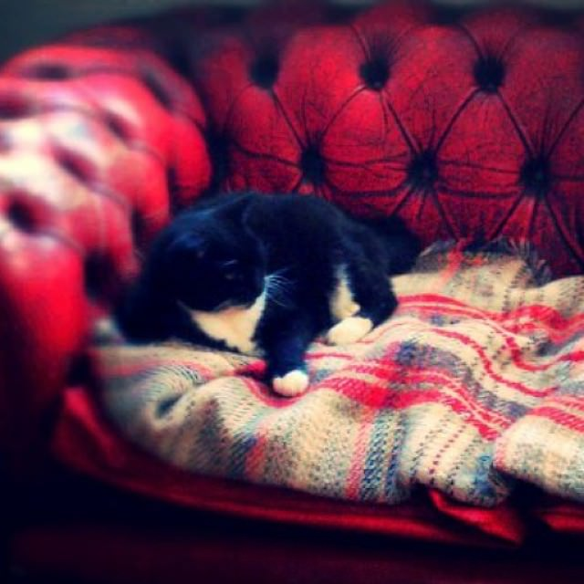 It's #Friday people, hope you get a cozy weekend like she is about to have ❤❤?. Autumn is the best ? #weekendmood #freepeople #ff #cozy #choosehappines #cat #shethecat #london #fridaymood #happymoments #cozyweekend #red #autumn #tagsforlikes #life #buongiorno