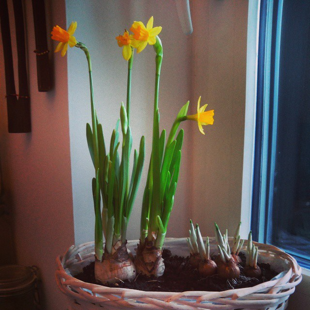 Morning views from the lunch table #photooftheday #instamood #instagood #flowerbowl #flower #winter #cozy #countryside #flowerpower #yellow #window #gardening #gogreen #mytinyatlas